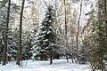 Русская зима в Калужкой области - panoramio.jpg