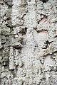 Стены-руины-2.jpg