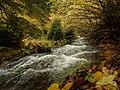 Цветове от есента.JPG
