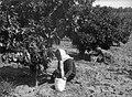 """גבעת השלושה - תלמידי בתיה""""ס של ירושלים בעבודה.-JNF044551.jpeg"""