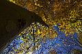 پاییزدر ایران-قاهان قم-Autumn in iran-qom 17.jpg