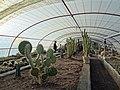 گلخانه کاکتوس دنیای خار در قم. کلکسیون انواع کاکتوس 20.jpg