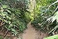 লাউয়াছড়া জাতীয় উদ্যান 06.jpg