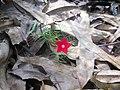 ดอกไม้แสนรักที่พบระหว่างทาง - panoramio.jpg