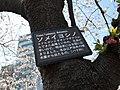 ソメイヨシノ (8619709699).jpg