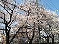 天神川高辻 - panoramio (2).jpg