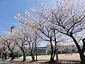桜井中学校(SAKURAI Junior high school).jpg