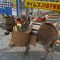駅前にロバの花屋さんがいる街、ここは逗子です。 (5355911355).jpg