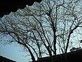 黃梅 - panoramio.jpg