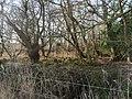 -2021-01-31 Bransmeadow Carr, Ridlington, Norfolk.jpg