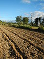 0096jfLandscapes Sunsets Fields Maronquillo San Rafael Bulacanfvf 08.JPG