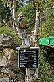 00 4180 NP Bayerischer Wald - Wetterstation.jpg