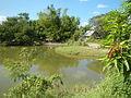 07920jfPampanga River banks Candelaria Welcome Calumpit Bulacan Roadsfvf 25.JPG
