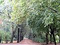 150913 Planty (Białystok) - 02.jpg