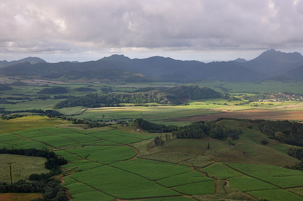 Sugar cane plantations near Rose Belle