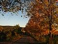 2011-10-26-174019 49,412604, 8,665408.JPG - panoramio.jpg