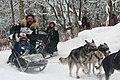 2012 Iditarod (6950515611).jpg