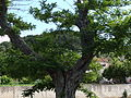 20130604 on the Island of Brač 042.jpg