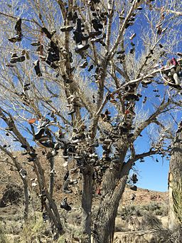 2015-04-02 15 08 27 Closeup of the new Middlegate Shoe Trees along U.S. Route 50 near Middlegate, Nevada