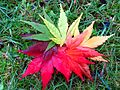 2015-05-02 autumn leaf fan 02.jpg