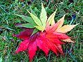 2015-05-02 autumn leaf fan 02.jpg