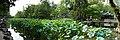 2015-09-24-122547 - Suzhou, Garten des bescheidenen Beamten.jpg