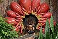 2015 Season's Greenings- Pollination Station (23681611282).jpg