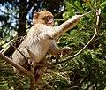 2016-04-21 14-03-10 montagne-des-singes.jpg