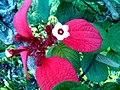 2 Flower 0160719 160110.jpg