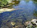 4 Tatata CW trout.jpg