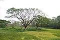 AJC Bose Indian Botanic Garden - Howrah 2018-04-01 2353.JPG