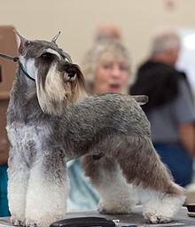 шварц порода собак