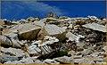 A 3200 mt. fioriscono anche le rocce - panoramio.jpg