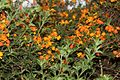 A Collection of Flowers from Ooty038.jpg