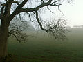 A December view of Woodnook Valley, Little Ponton, Lincolnshire, England 14.JPG