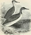 A popular handbook of the birds of the United States and Canada (1903) (14749961654).jpg