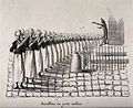 A regiment of clyster-wielding apothecaries orchestrated by General George Mouton de Lobau Wellcome V0011726.jpg