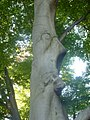A tree in the park by Zürichsee (3967718016).jpg