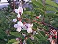 Ab plant 2132.jpg
