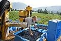 Abby Blueberries - machine picking blueberries in July.jpg