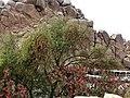 Agilika Island 阿基利卡島 - panoramio.jpg