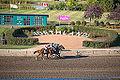 Alberta Breeders' Fall Classic 2014 - Horse Racing (15281659666).jpg