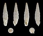 Albinaria lerosiensis 01.jpg