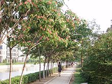 arbre a faisan