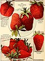 Allen's book of berries - 1916 (1916) (17951710725).jpg