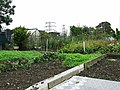 Allotments - geograph.org.uk - 595643.jpg