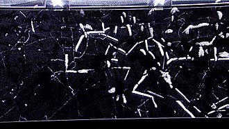 Particle detector - Cloud chambers visualize particles by creating a supersaturated layer of vapor. Particles passing through this region create cloud tracks similar to condensation trails of planes