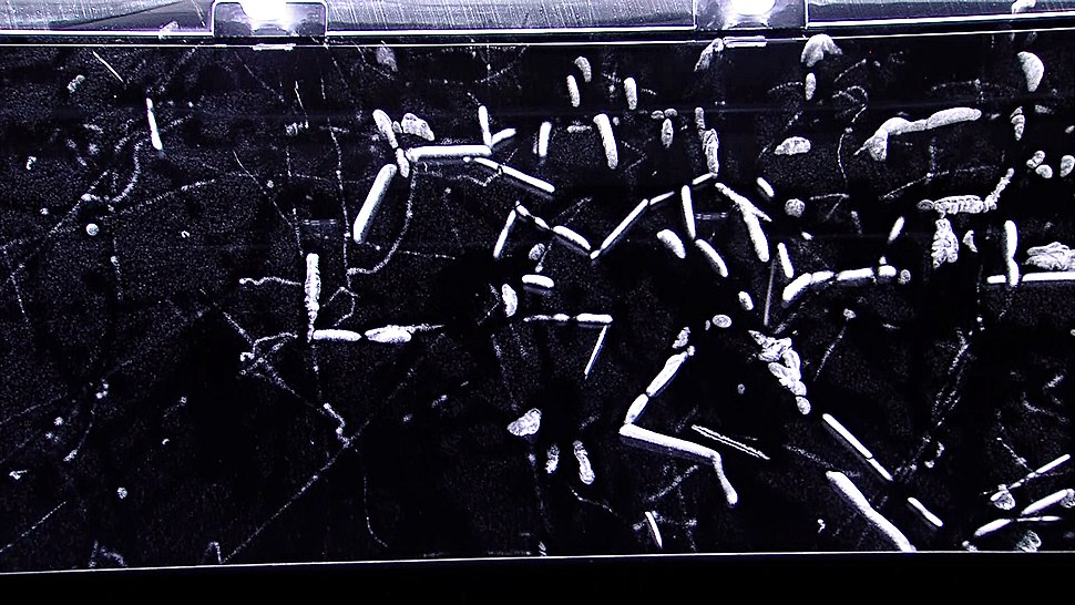 Alpha radiation in a cloud chamber