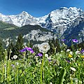 Alpine Blossoms.jpg