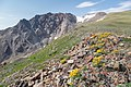 Alpine views on the north side of Electric Peak (36796602170).jpg